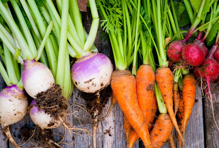 Turnips, carrots, and radishes with dirt on them and their tops still on, on top of a wooden table.